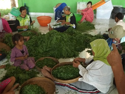 Social Empowerment for Leaf Process